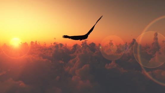 p_bird-soaring-above-the-clouds-1920x1080-wallpaper-l4vpv
