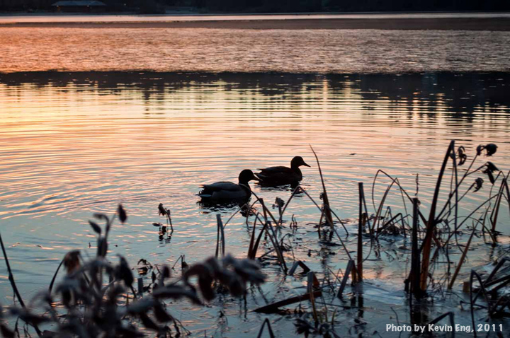 Two_Ducks_Silouhette_Deer_lake_morning_Dec5_fromraw_0559_WATERMARKED2_small