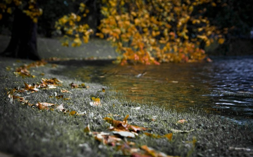 Autumn-River-Bank