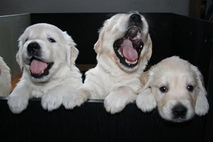 Stop Dog Barking 1