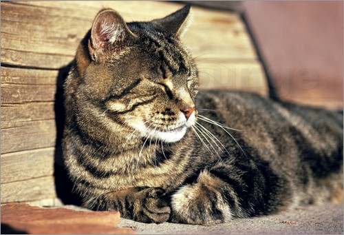 ric-ergenbright-sleeping-tabby-cat-at-capitol-reef-national-park-214581