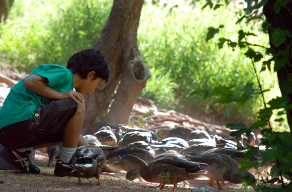 LAuberge-de-Sedona-Boy-Ducks_588