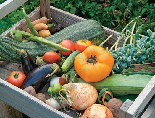 BCGardens_vegetables_box