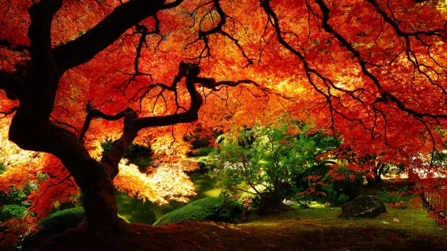 Autumn-Nature-Desktop
