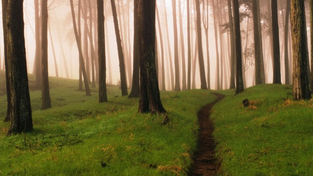 Forests_wallpapers_219