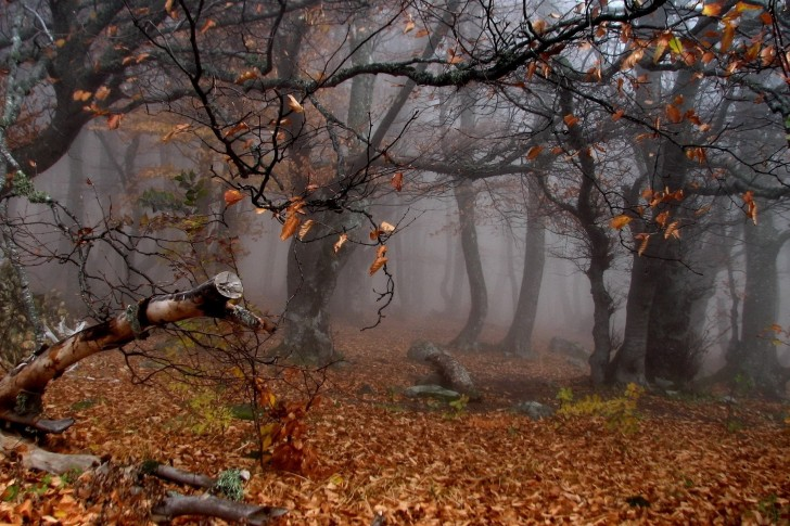 Trees-Autumn-Season-Leaves-Mist-485x728