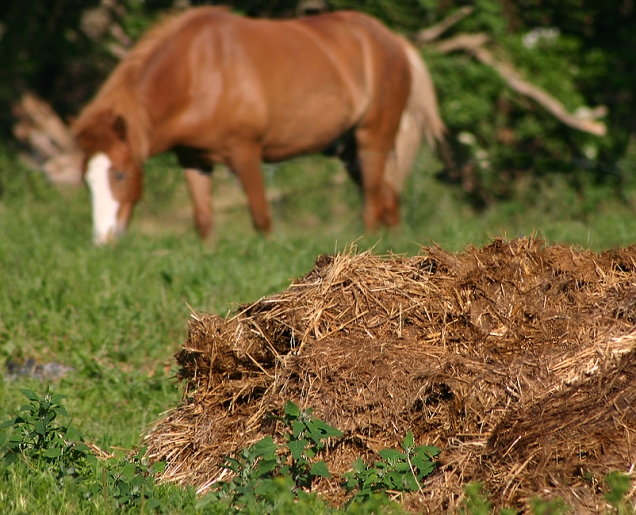 Hestemøj