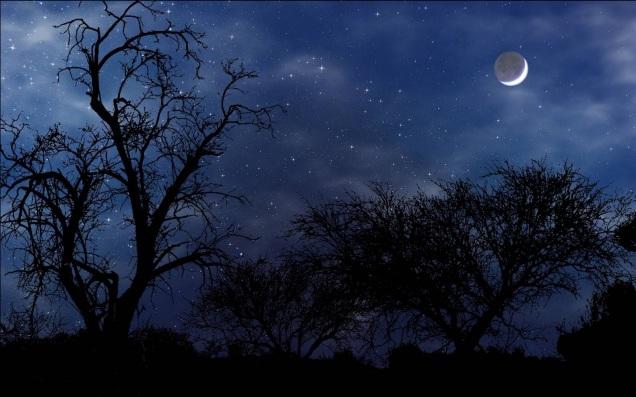 night-scene