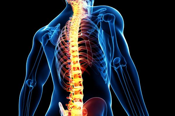 Male spine anatomy