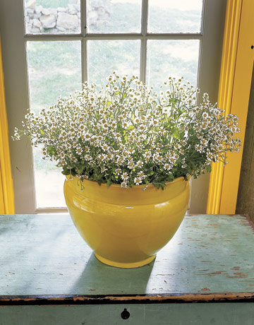 Yellow-Vase-Daisies-Window-HTOURS0706-de