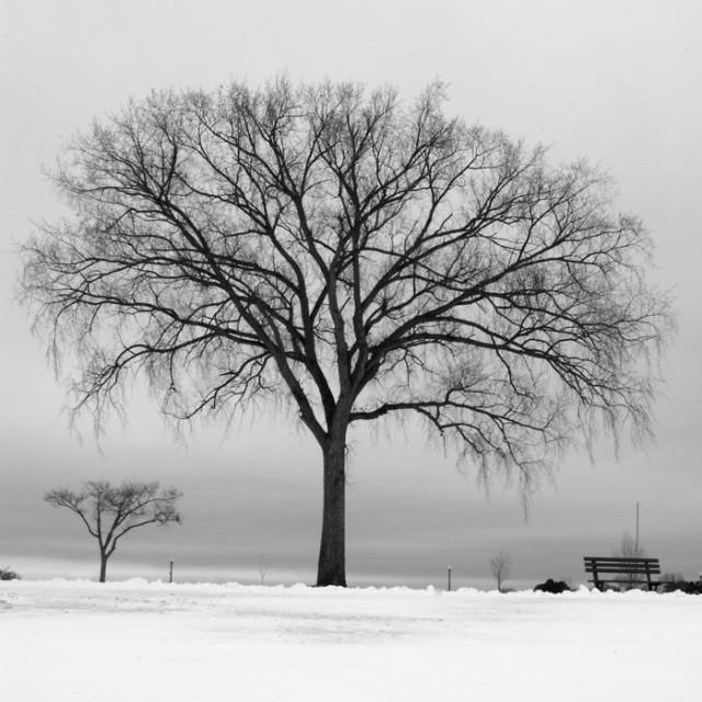 bare_tree