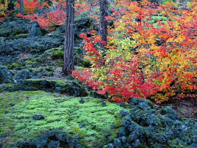 mckenzie_lava_fields__willamette_national_forest