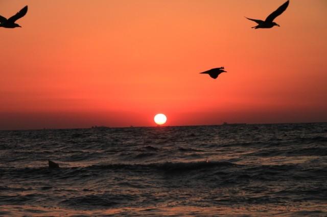 birds-flying-above-the-sea-at-sunrise__56028-1024x682.jpg?w=1024
