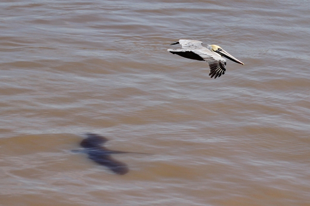 http://bybio.wordpress.com/2013/02/28/flying-down-the-river/