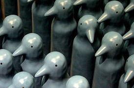 nonconformity-ducks
