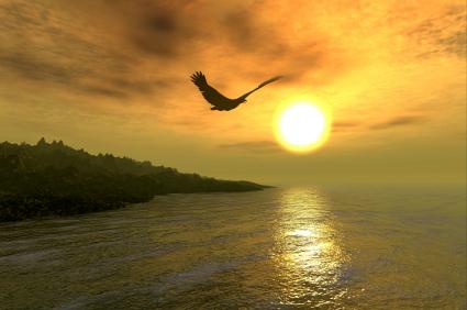 soaring-bird