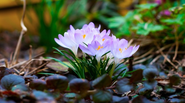 spring_flowers_1680_x_1050_widescreen-1920x1080