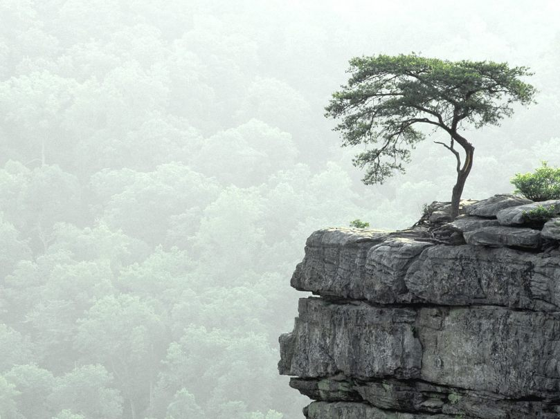 Tree at the precipice