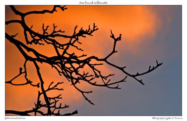 http://yellowcaseartist.deviantart.com/art/tree-branch-silhouette-150623670