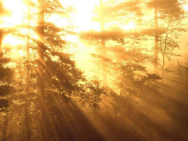 76_NewHampshire_forestsunrise_freecomputer_desktopwallpaper_l